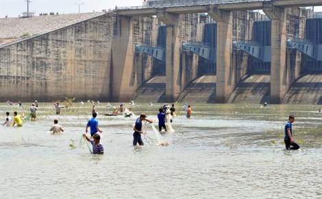 Hàng trăm người chen nhau dưới chân đập thủy điện bắt 'kình ngư'