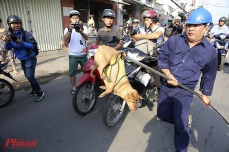 Xử lý chó thả rông trên đường phố để đảm bảo an toàn cho người dân