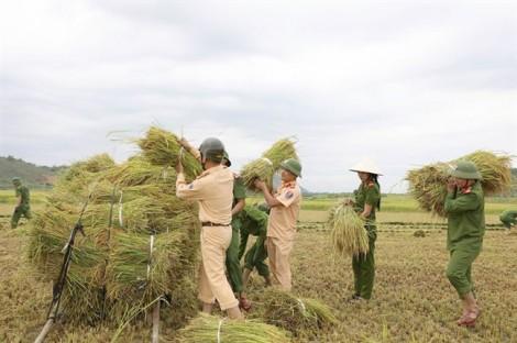 Công an xuống đồng gặt lúa chạy bão cùng nông dân