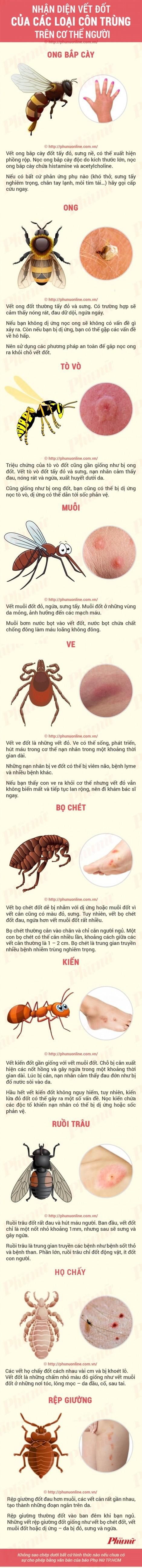 Nhận dạng vết cắn của các loại côn trùng
