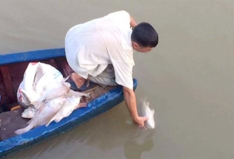 Người dân bất an vì cá chết trắng sông Hoàng Mai