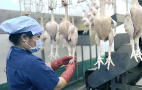 Chưa nhiều điểm bán thịt và trứng gia cầm truy xuất được nguồn gốc
