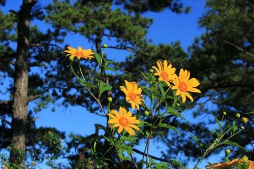 Nhung cung duong hoa da quy Da Lat vao thu dep xieu long
