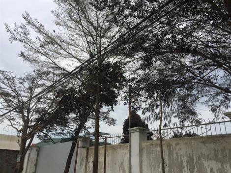 Sẽ thanh tra cơ sở để rò rỉ khí độc NH3 khiến cả ngàn người di tản