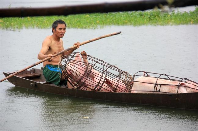 Nguoi dan trang dem chay lu, 'suoi am' vat nuoi