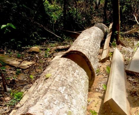 Giám đốc cùng 2 cán bộ lập chứng từ khống 'ăn' 800 triệu đồng tiền bảo vệ rừng
