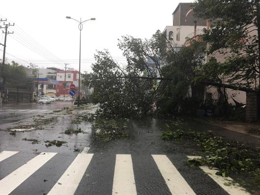 Nha Trang: Nha toc mai, cay xanh nga la liet trong bao Damrey