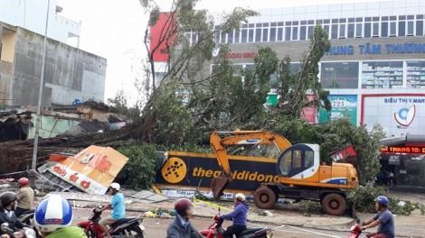 Cây đa biểu tượng của huyện Ea Kar bất ngờ đổ gãy, đè sập nhiều căn nhà