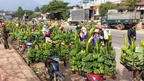 Chính phủ sẽ đối thoại cùng nông dân tìm hướng đi mới
