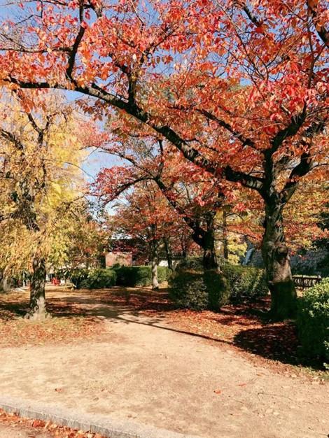 Ký ức về mùa thu Osaka Nhật Bản