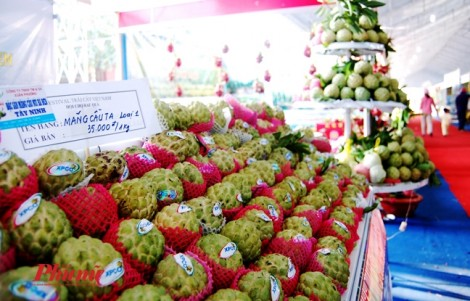 Phát hiện trái cây ở hội thi, chợ phiên có hàm lượng thuốc bảo vệ thực vật quá mức cho phép