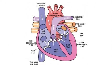 Hở van tim là gì, có nguy hiểm không?