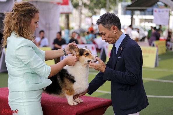Trai nghiem thu vi khi xem cun cung tranh tai o Dog show 2017