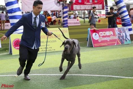 Trải nghiệm thú vị khi xem cún cưng tranh tài ở Dog show 2017