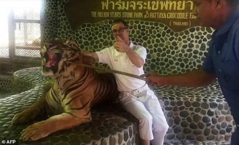 Sở thú Thái Lan bị chỉ trích vì chọc hổ cho du khách chụp hình