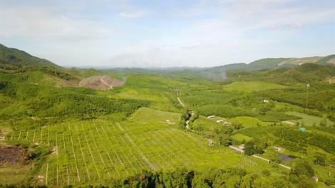 Doanh nghiệp vào rừng làm nông nghiệp hữu cơ