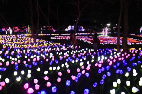 9.999 đóa hồng bằng đèn LED thắp sáng Thảo Cầm Viên Sài Gòn
