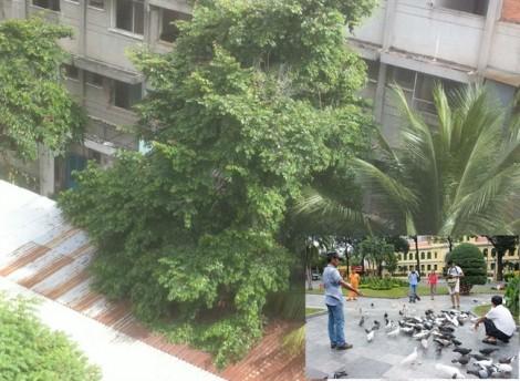 Sài Gòn, nơi trú ngụ an toàn của sinh vật