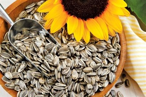 Hoa hướng dương trị bệnh gì?