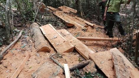 Điều tra vụ phá rừng quy mô lớn trong vườn quốc gia
