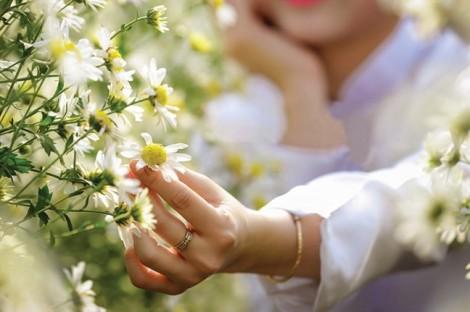 Hoa nở suốt 365 ngày