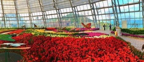 Ra mắt lễ hội hoa tulip lớn nhất Việt Nam tại Vinpearl Nha Trang