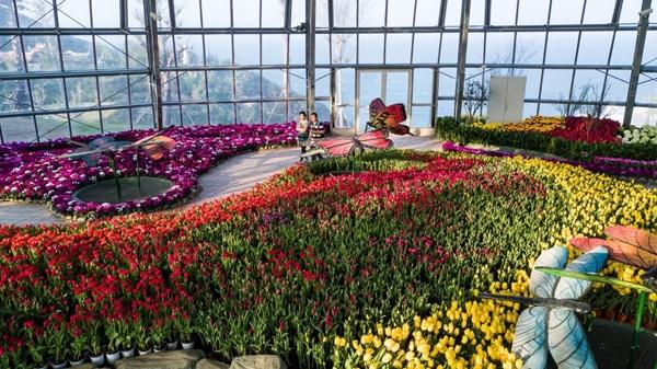 Hen uoc giua ngan hoa tulip