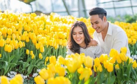 Hẹn ước giữa ngàn hoa tulip