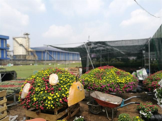 Ngam chu cho linh vat khong lo bang hoa se xuat hien tren duong hoa Nguyen Hue