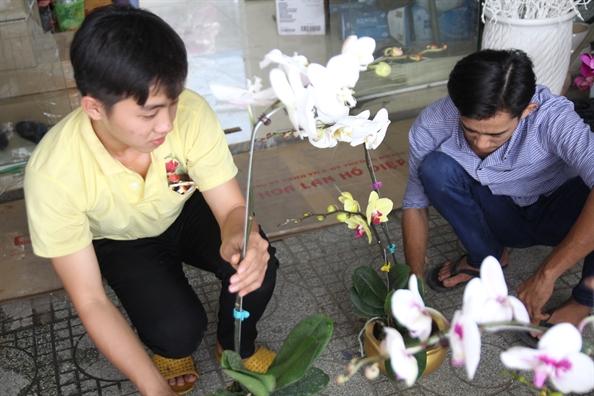 1 trieu dong/canh lan ho diep, nguoi ban tu tin day het hang truoc 29 tet