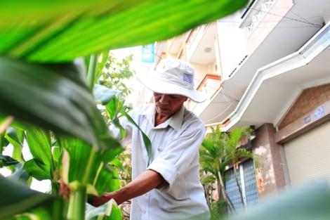Mang 'hạt ngọc trời', bắp kiểng về phố