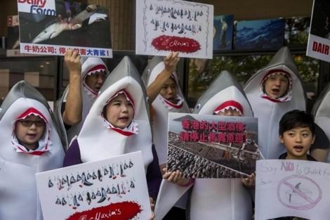 Mức tiêu thụ vây cá mập tăng cao ở Việt Nam và một số nước châu Á