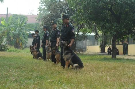 Xem cảnh khuyển cùng cảnh sát Sài Gòn luyện tập trấn áp tội phạm trong xuân Mậu Tuất