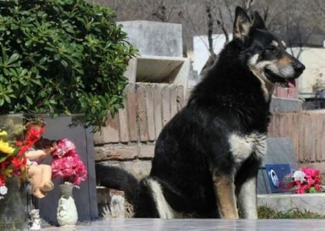 Những chú chó khiến cả thế giới ngợi khen về lòng trung thành