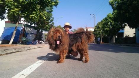 Năm Tuất kể chuyện thạc sĩ 8X liều lĩnh khởi nghiệp với chó ngao Tây Tạng