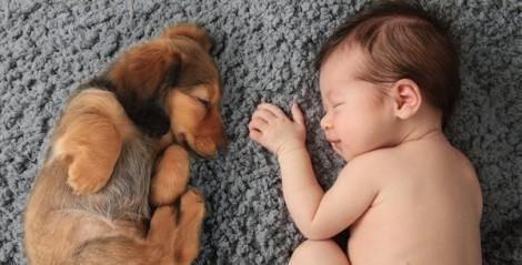 Trẻ thơ yên giấc bên cạnh người bạn thú cưng
