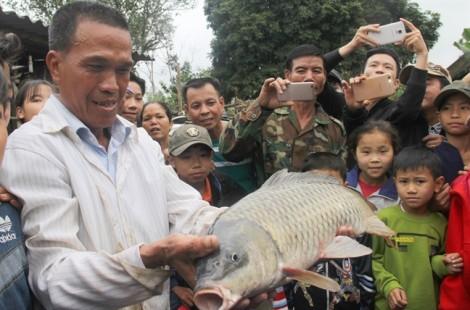 'Cá thần' xuất hiện ở Nghệ An bị người dân dùng chài bắt