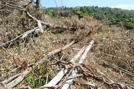 Khởi tố 5 người trong vụ tàn phá hơn 14 ha rừng