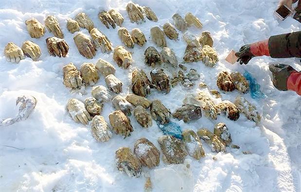 Hang loat cau hoi dat ra trong vu phat hien 54 ban tay nguoi bi chat o Siberia