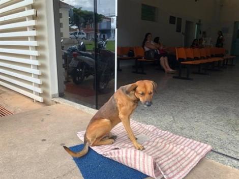 Bốn tháng sau khi chủ qua đời, chú chó trung thành vẫn chờ ngoài cửa bệnh viện