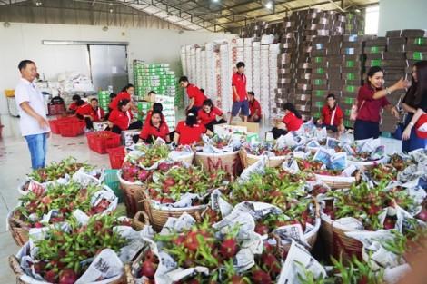 Doanh nghiệp bắt tay nông dân để rộng đường xuất khẩu