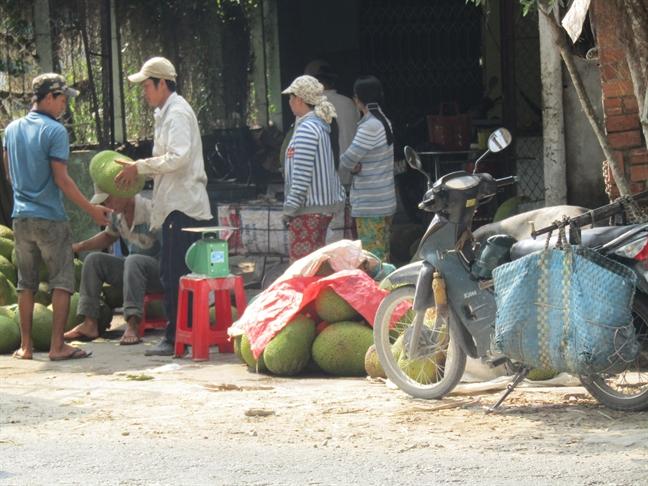 Thuong lai lung suc vuon mit Thai