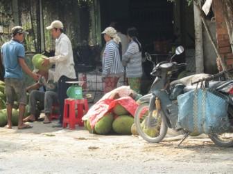 Thương lái lùng sục vườn mít Thái