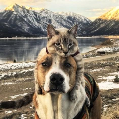 Chuyện kỳ lạ chú chó cõng mèo, cùng nhau đi khắp bốn phương