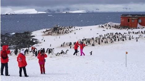 Bùng nổ du lịch Nam cực của người Trung Quốc và cái giá phải trả