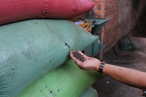 Bên trong cơ sở chế biến cà phê với... bột đá và pin Con Ó