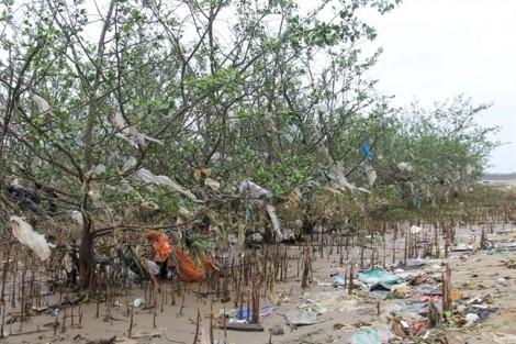 Người dân thiếu ý thức, rừng phòng hộ bị hô biến thành 'rừng' rác thải