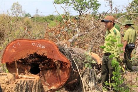 Bộ Công an vây bắt vụ vận chuyển gỗ quy mô lớn