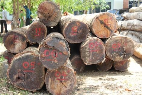 Bộ Công an huy động hàng trăm chiến sĩ đột kích bãi gỗ lâm tặc tại Vườn quốc gia Yok Đôn