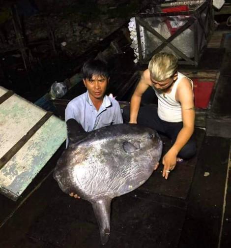 Ngư dân Huế bắt được cá mặt trăng quý hiếm